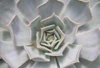 cactus-1529343_1920